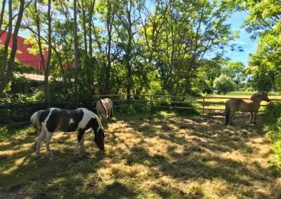 Pony reiten auf dem Ferienhof